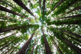 Waldmedizin: Die faszinierende Wirkung der Waldluft | apomio Gesundheitsblog