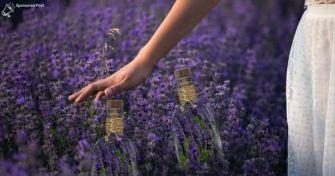 Pur und hochwertig: 100% naturreines Lavendel-Öl | apomio Gesundheitsblog