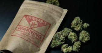 Cannabis: Droge oder Schmerzmittel?