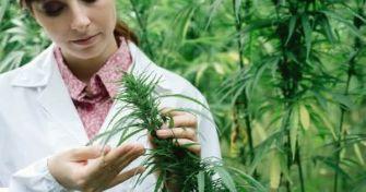 Medizinisches Cannabis: So wirken die Hanf-Medikamente   apomio Gesundheitsblog