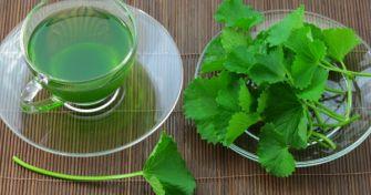Gotu Kola - Wie wertvoll ist das exotische Heilkraut? | apomio Gesundheitsblog