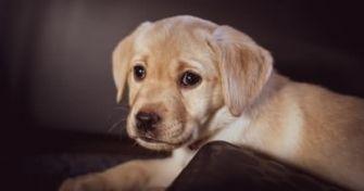 Keine Lappalie, aber gut zu behandeln: die Ohrenentzündung beim Hund | apomio Gesundheitsblog