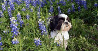 Für den Hund tabu: Diese Pflanzen sind giftig für den besten Freund | apomio Gesundheitsblog