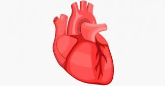 Schwaches Herz: die Herzinsuffizienz | apomio Gesundheitsblog