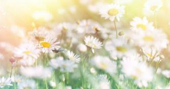 Frühling ist Heuschnupfen-Zeit: Tipps gegen die Pollen