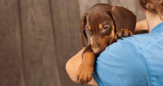 Studie zeigt: Hundehalter leben länger | apomio Gesundheitsblog