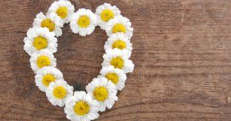 Mutterkraut: Migräne natürlich bekämpfen