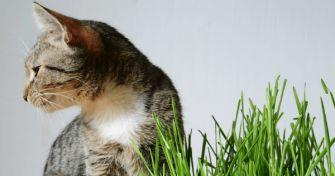 Vorsicht, Mieze! Grüne Gewächse, die Katzen schaden können | apomio Gesundheitsblog