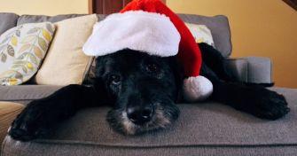 Diese Weihnachtsköstlichkeiten sind für Hunde tabu   apomio Presse