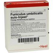 Funiculus umbilical Suis Injeel