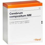 Cerebrum compositum NM