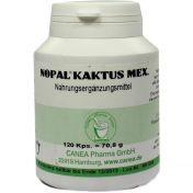 Nopal-Kaktus mex. günstig im Preisvergleich